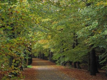 Mindful wandelen en genieten van de natuur